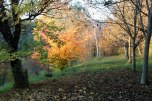 IMG_7354-arboretum-allegee