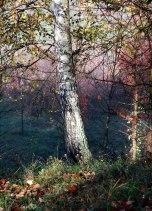 IMG_7369-arboretum-allegee