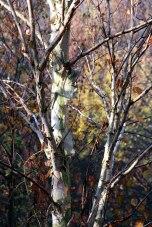 IMG_7370-arboretum-allegee