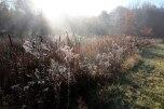IMG_7384-arboretum-allegee
