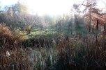 IMG_7386-arboretum-allegee