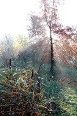 IMG_7388-arboretum-allegee