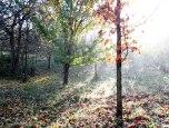 IMG_7405-arboretum allegee